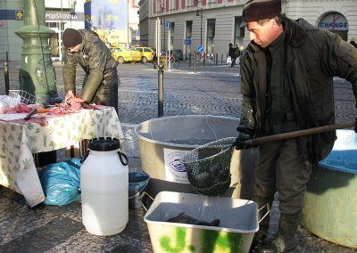 Carp in a Bathtub and Carp Massacre at Christmas in Prague