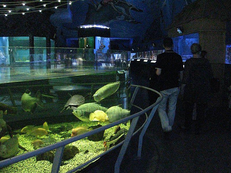 Sea World, Shark Watching in Prague